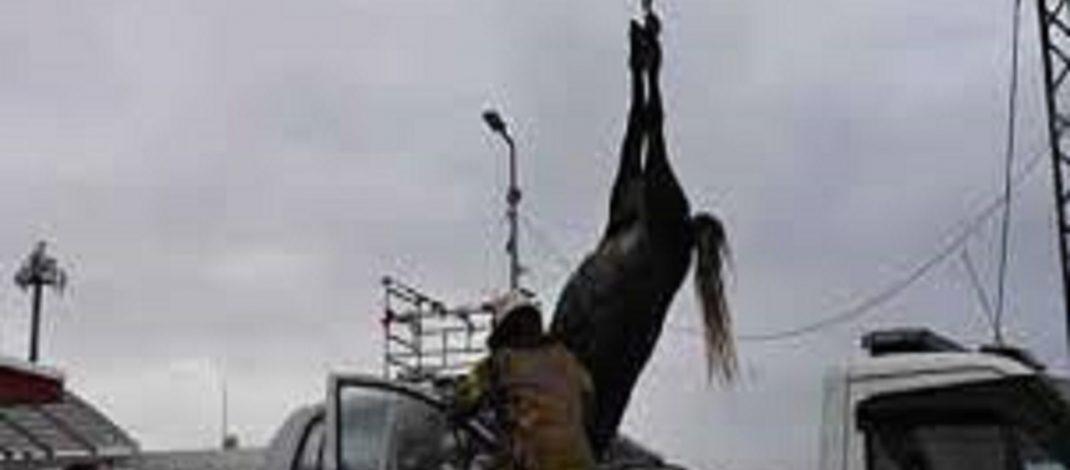Büyükçekmece'de bir otomobil başıboş gezen 3 ata çarptı